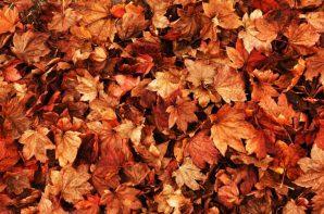 Autumn-event-ideas-730x485
