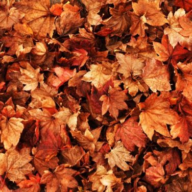Autumn-event-ideas-730x485