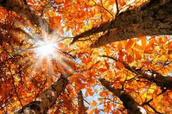 autumn-leaves-equinox