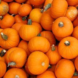 wintersquash-pumpkin.jpg.653x0_q80_crop-smart